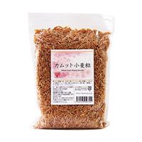 カムット小麦粒